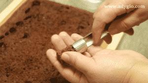 prajitura cu buzunare de budinca fanta cotor